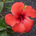 Flora :)