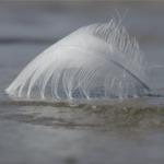plume dans le vent