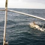 penn sardin des abers